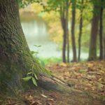 Śliczny i {schludny ogród to nie lada wyzwanie, przede wszystkim jak jego konserwacją zajmujemy się sami.